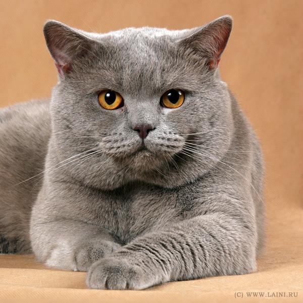 Шинглз это не болезнь — это мой кот