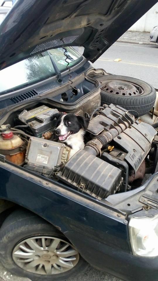 Женщина проверяет двигатель после поломки автомобиля — и находит внутри улыбающуюся собаку