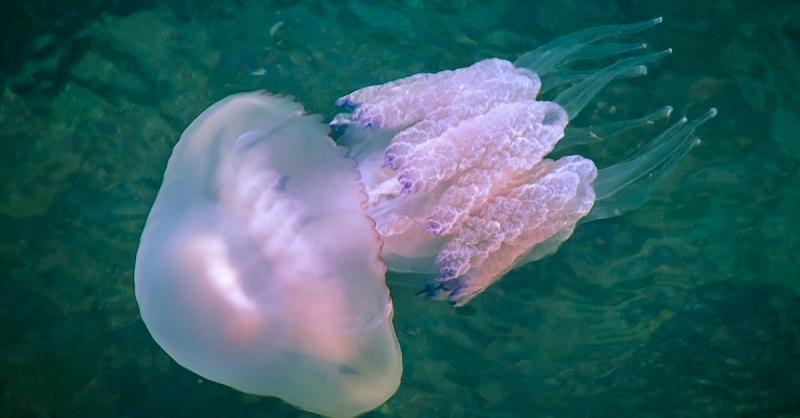 Ужалила медуза: что можно, а чего нельзя делать категорически