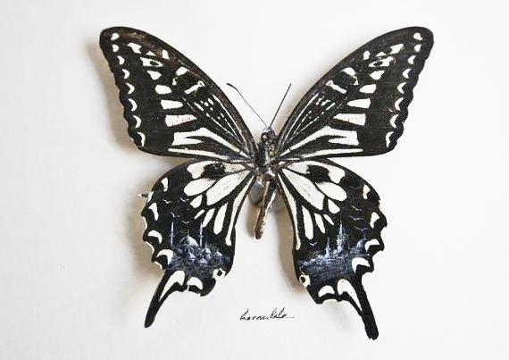 Картины на крыльях бабочек