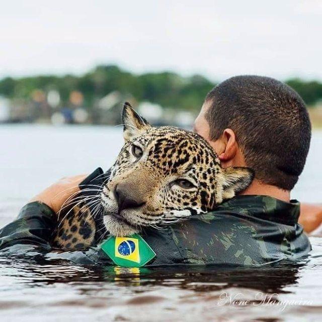 Они нашли его еле живым! Спасенный от наводнения ягуар обнимает людей, как домашний кот
