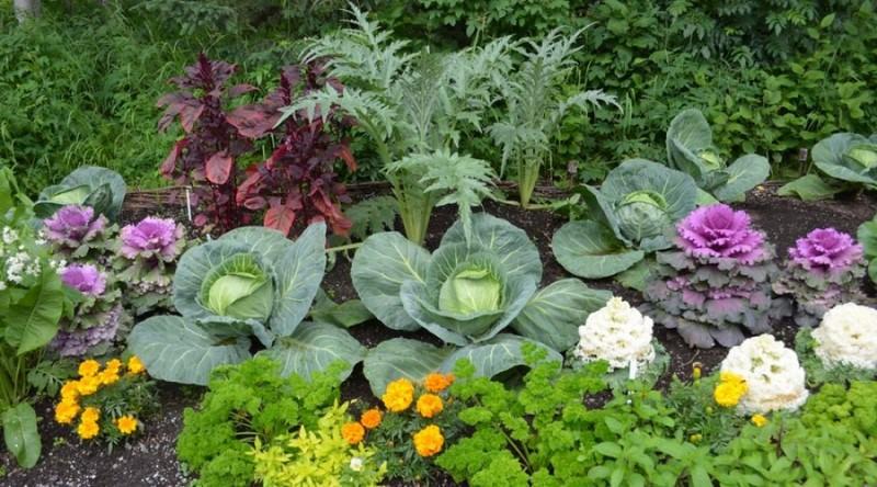 Эти овощи жить друг без друг…