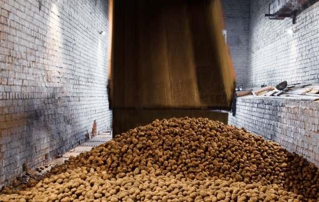 Как не остаться без картофеля