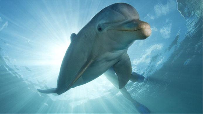 Одинокий дельфин терроризирует посетителей французского пляжа