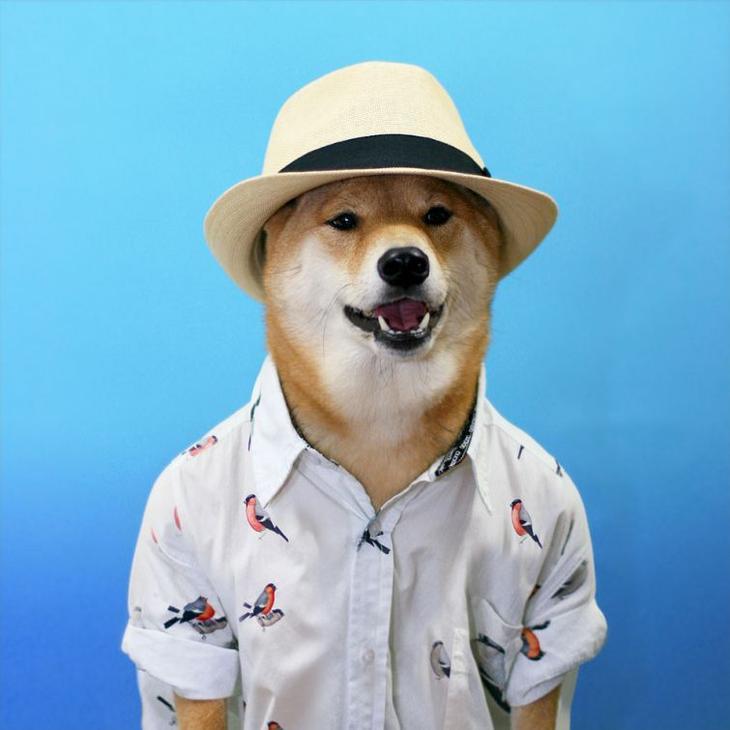 Популярные собаки и кошки из интернета, которые зарабатывают больше чем мы с вами