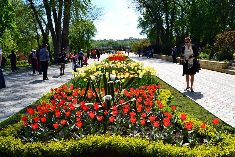 Тюльпаны  Кишиневского дендрария