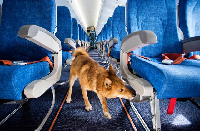 Как работают собаки в аэропорту