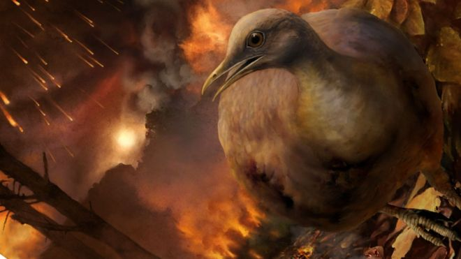Как птицы пережили падение н…