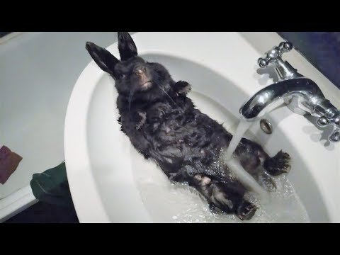 Приколы с котами и Приколы с животными подборка 2018 Очень смешные животные