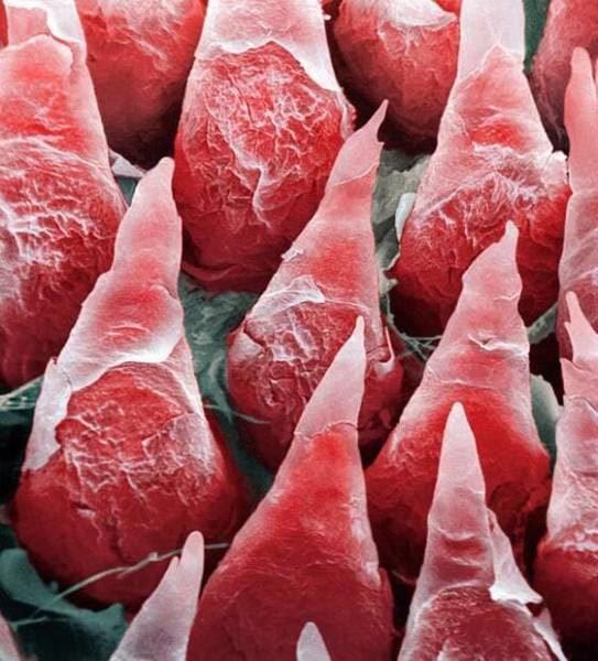 Ваше тело под микроскопом