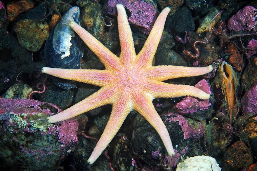 971 Подводные чудеса Белого моря на фото Александра Семенова