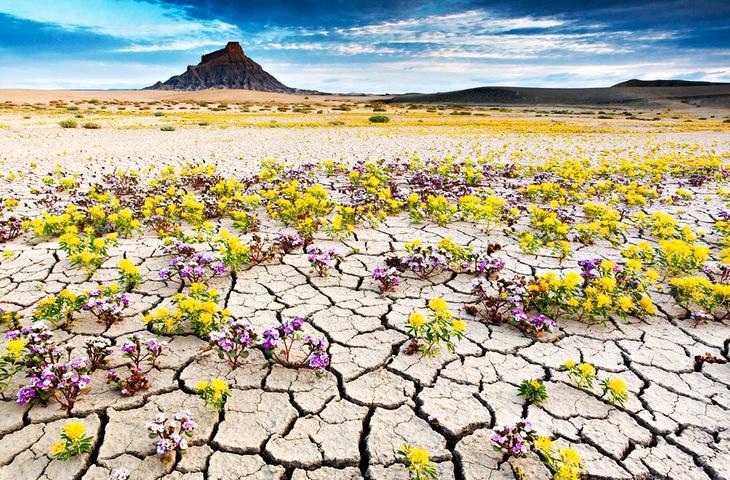 АнзаБоррего США. Жажда цветов и красок. 11 самых необычных и загадочных пустынь нашей планеты. Фото с сайта NewPix.ru