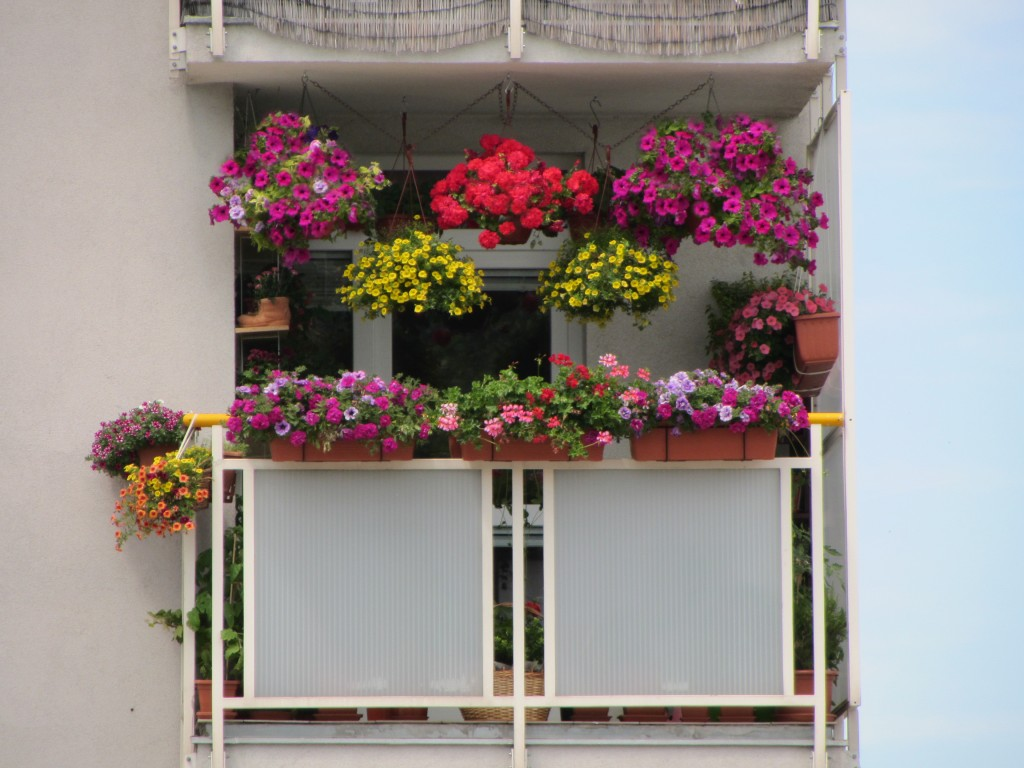 Мой южный балкон. цветик-семицветик.