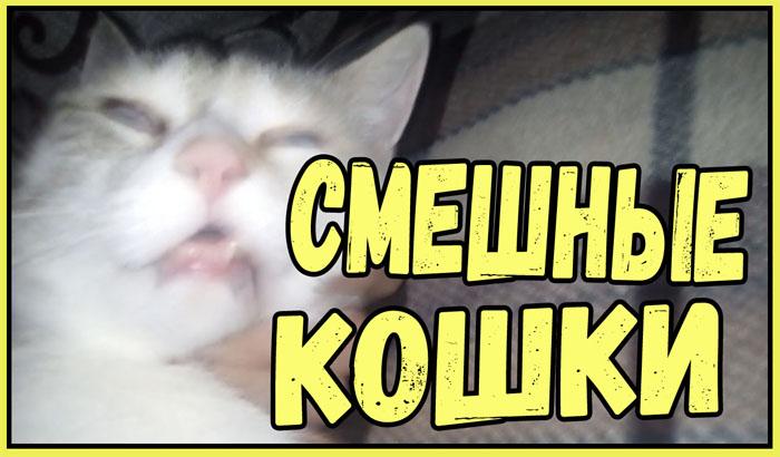 Кошки для поднятия настроения