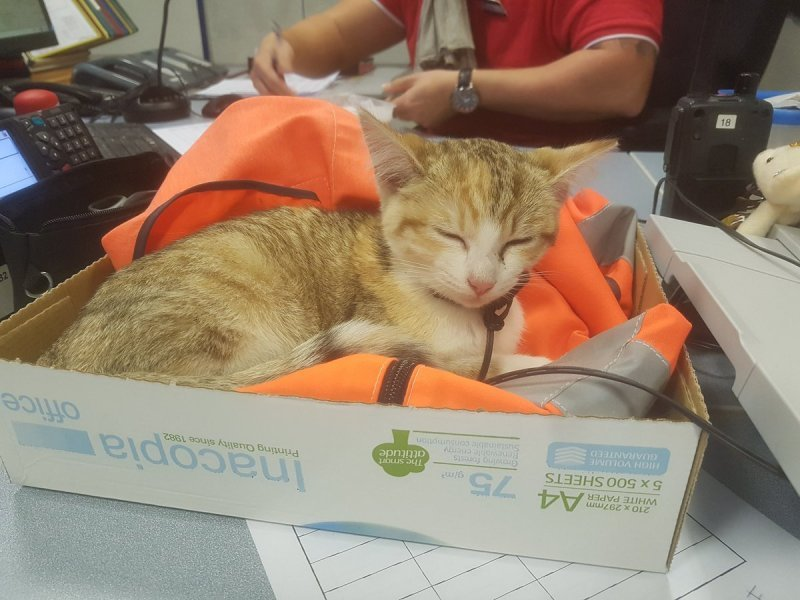 Отважный котенок вернулся к своей французской хозяйке на поезде ynews, животные, котенок, новости, поезд, разлука, франция