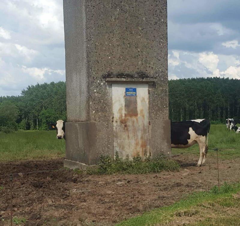 5. Это не одна длинная корова и такое бывает, обман зрения, приколы, смешные фото, смешные фотографии, странные фото, юмор