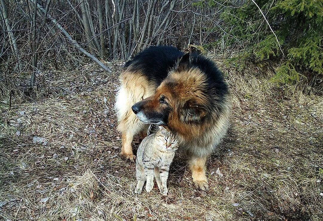 Старая овчарка взяла под защиту бездомного котика. И вот что из этого вышло!
