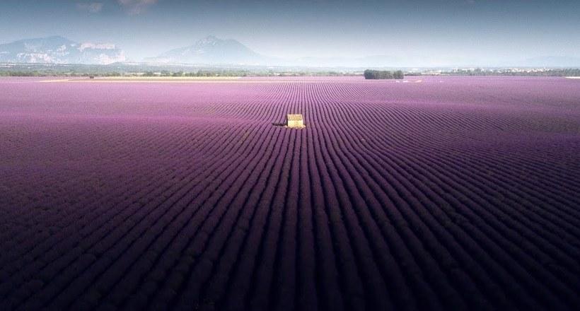 Воздушные снимки лавандовых полей волшебной красоты на юге Франции