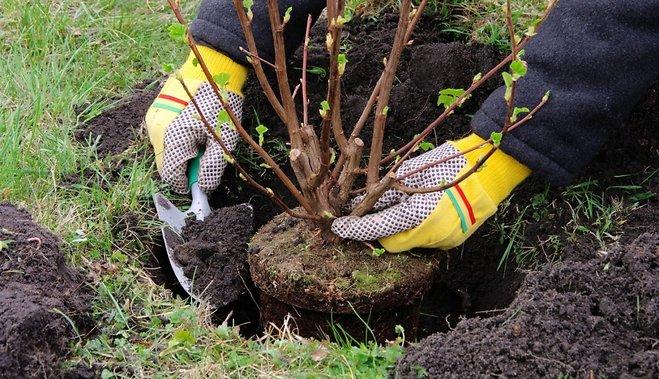 Сажаем деревья, кустарники и лианы в сентябре