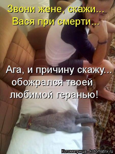 Свежая котоматрица (35 фото)