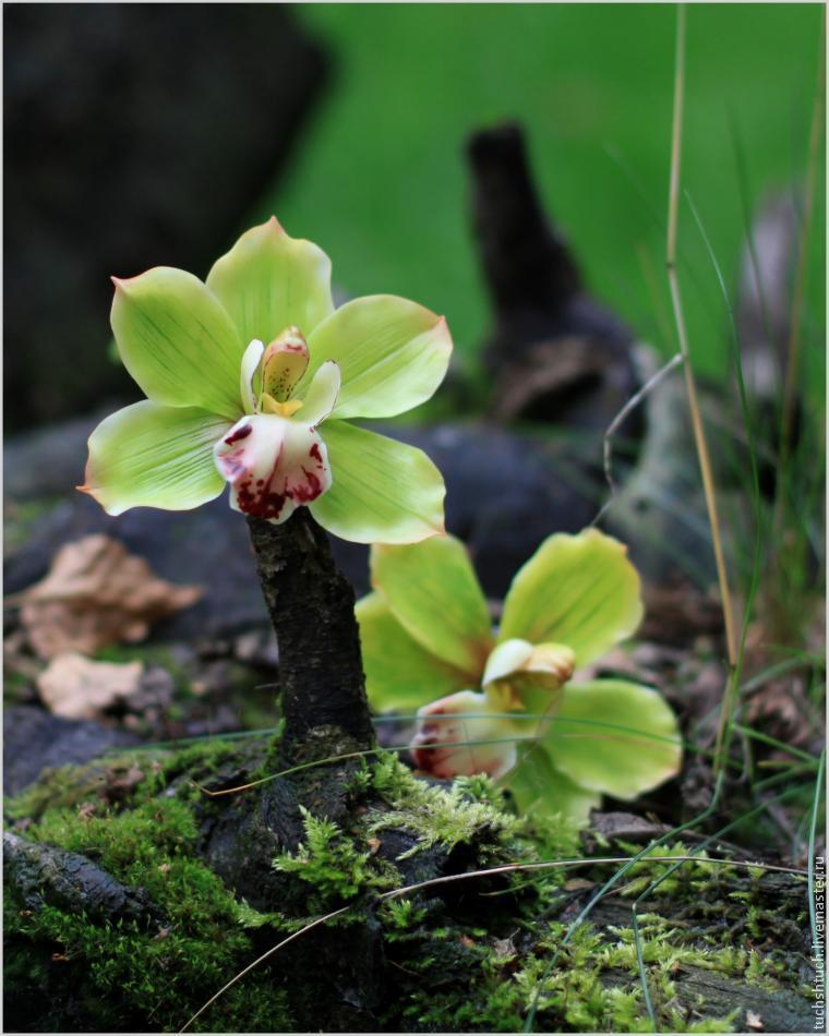 Лепка орхидеи цимбидиум из полимерной глины