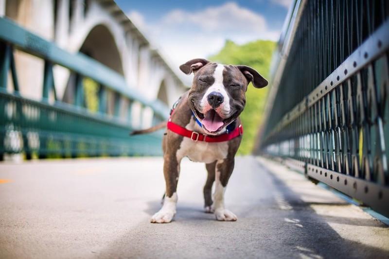 """3 место в категории """"Спасение собак и благотворительность"""" - Кайли Грир, США Кеннел клаб, животные, конкурс, лондон, портрет, собаки, фото, фотография года"""