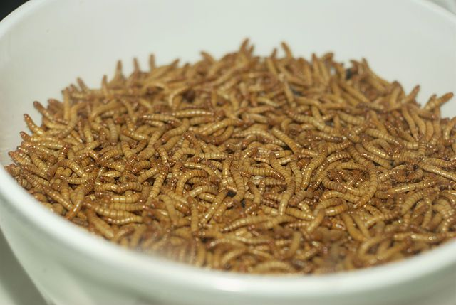 В Швейцарии начнут продавать котлеты из мучных червей