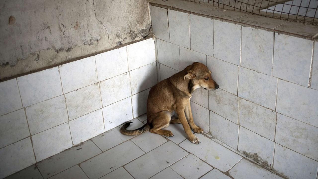 Не подбрасывайте животных в клинику
