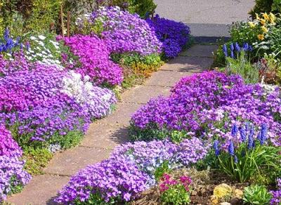 Цветущие почвопокровные растения.