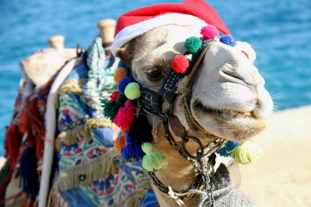 Католическое Рождество. В Египте. О святости.
