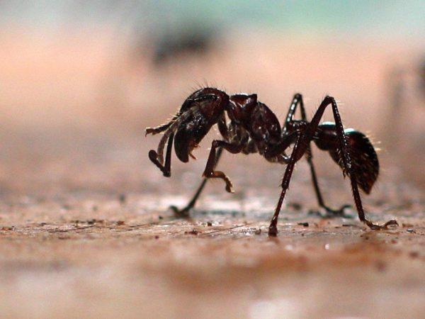 Самые опасные насекомые в мире