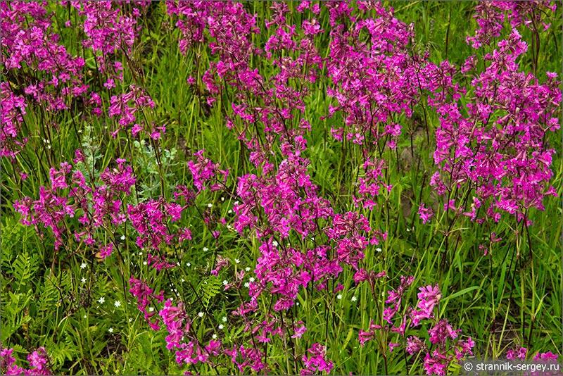 Картинки по запросу лето,травы и цветы Картинки