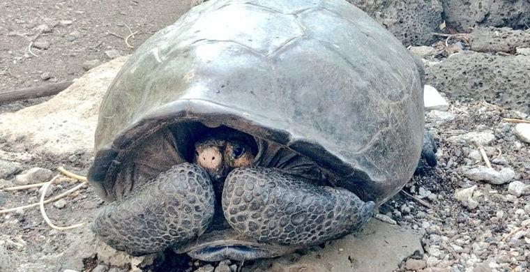 На Галапагосских островах обнаружили черепаху, которую считали вымершей больше 100 лет