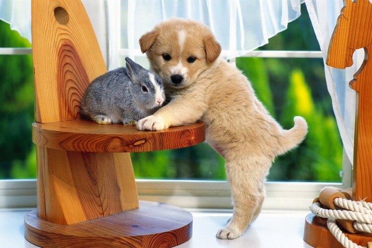 Потрясающие снимки удивительной дружбы животных разных видов. Это так мило!