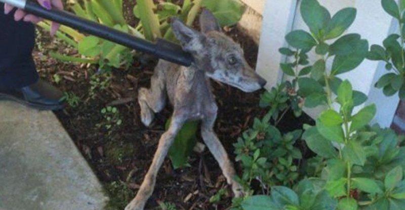 Люди спасли очень больную собаку, но позже поняли, что это вообще не собака