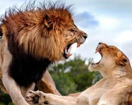А вы знаете, какое единственное слово нельзя произносить во время ссоры? Думайте дважды, прежде чем его сказать!