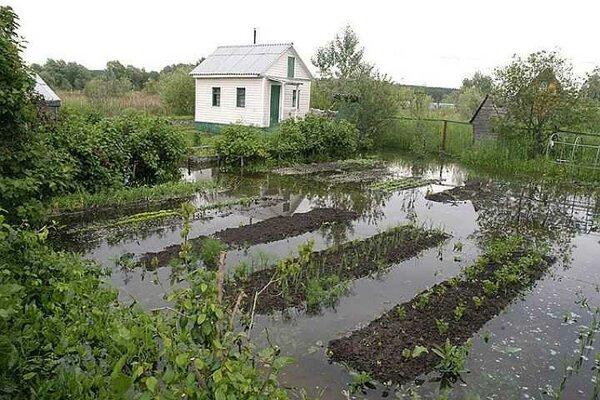 Дренаж садового участка