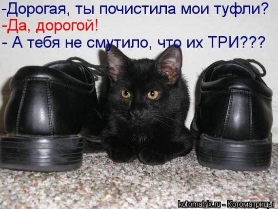 1359322229_1359093514_kotomav4 (570x428, 70Kb)