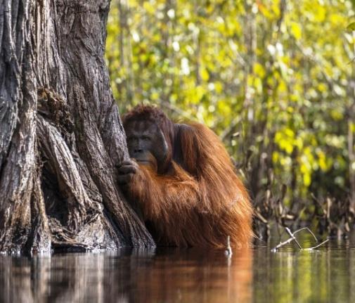 """Фото, от которых перехватывает дыхание — победители """"Nature Photographer of the Year"""""""