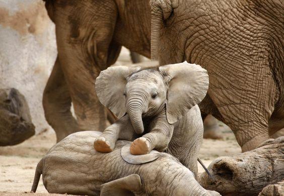 Зоологи рассказали о роли бабушек у животных