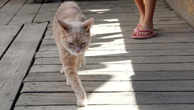 На Аляске умер кот, который почти 20 лет был мэром города