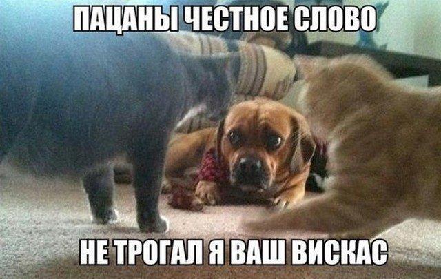 Зверский позитив)
