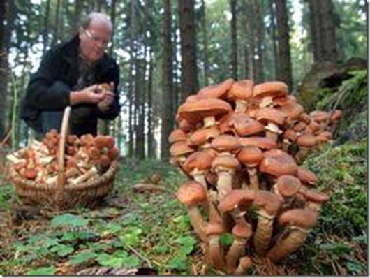 Наука о грибах