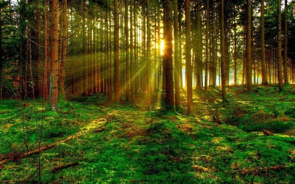 Зеленая угроза: растениям грозит исчезновение