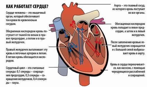 Как сделать так чтобы остановилось сердце 185