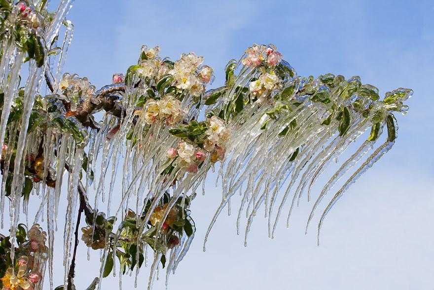 25 потрясающих ледяных скульптур, созданные самой природой зима, лед, природа, скульптура