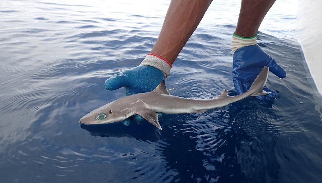 Новый вид акул похож на персонажей из аниме