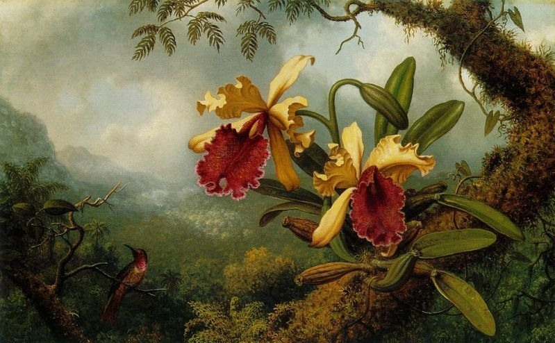 Цветы и птицы в работах художника Martin Johnson Heade