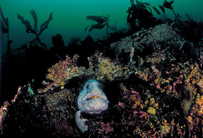 На глубине холодного моря