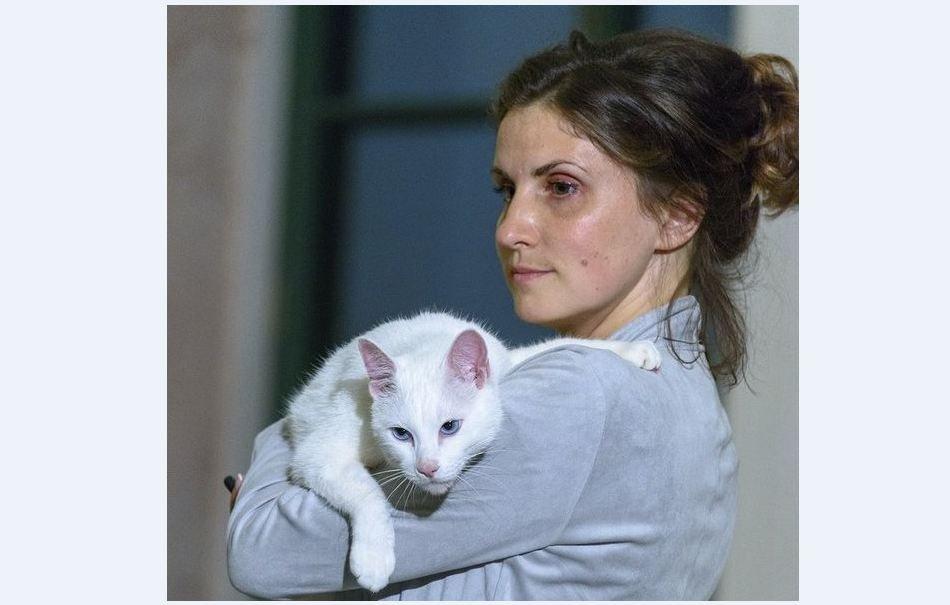 Основатель «Республики котов» о решении суда по бездомным животным: у Петербурга должен быть свой путь